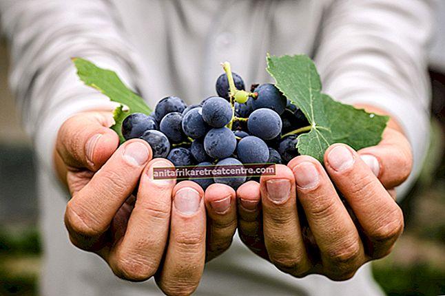 Quali sono i vantaggi dell'uva? Ecco i benefici dell'uva alimentare miracolosa ...